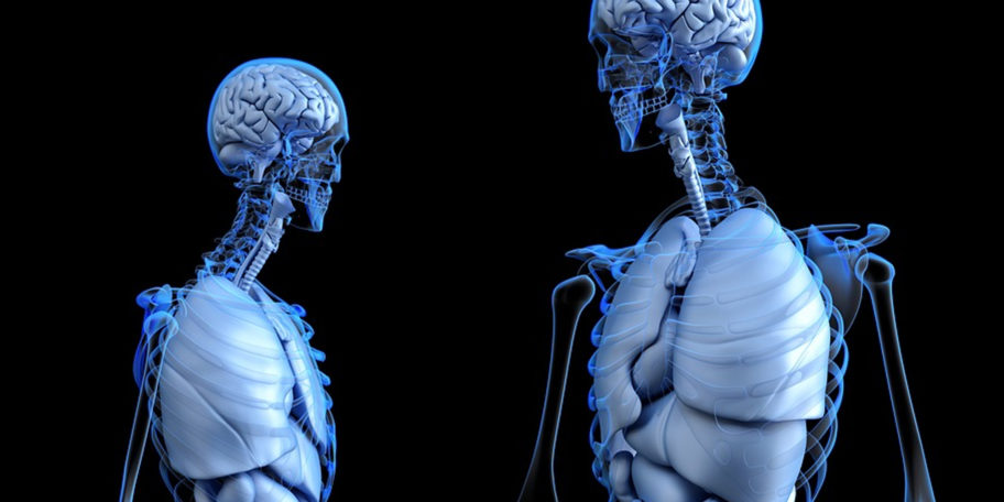 Scientists Have Discovered A New Organ In The Human Body