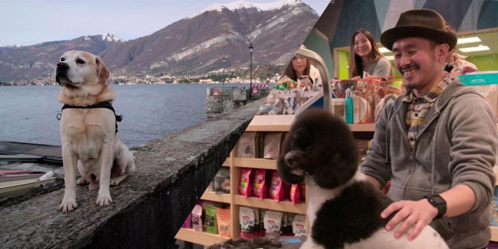 Dogs Netflix Featured