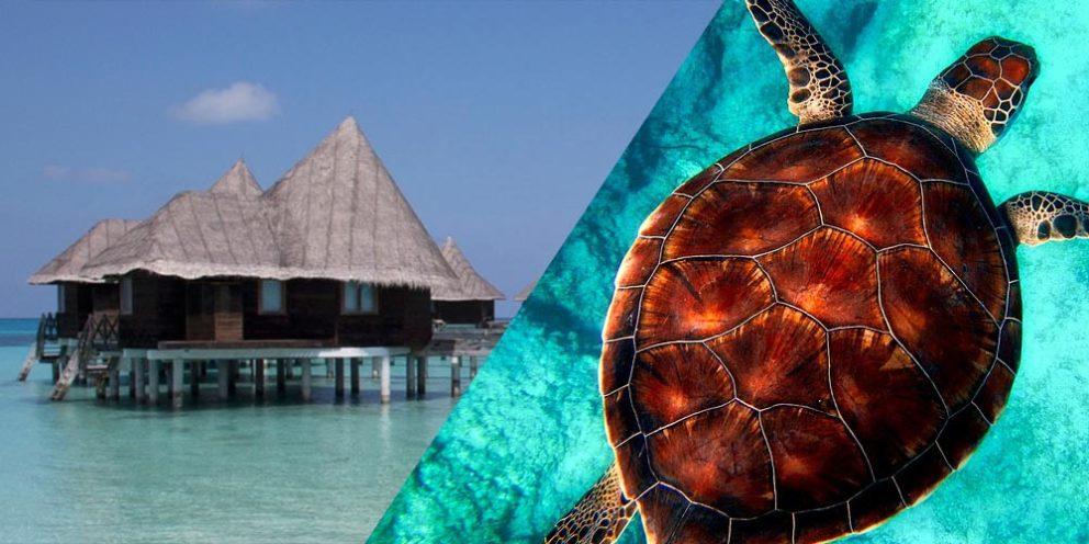 Turtle Maldives