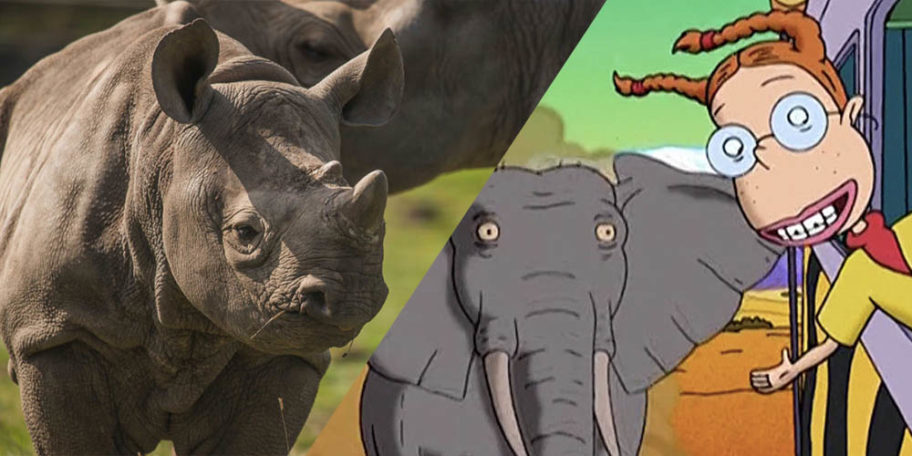 Rhino Chester Zoo