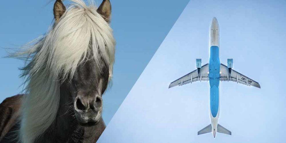 Plane Horse